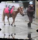 Vign_baby_poney